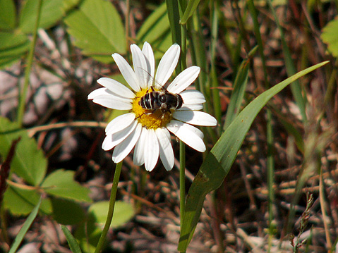 Canada Ontario Photos :: AlexM :: Ontario. Flower in Agawa Canyon