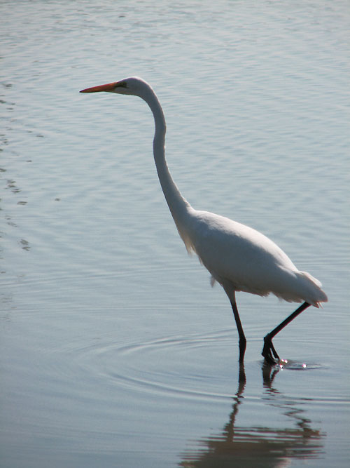 Canada Ontario Photos :: African Lion Safari :: African Lion Safari - a white crane