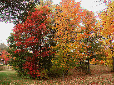 Canada Ontario Photos :: Algonquin Park :: Colorful Fall Trees