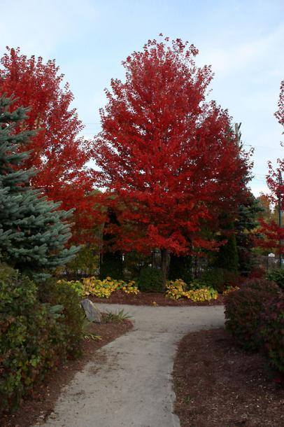 Canada Ontario Photos :: Bracebridge :: Bracebridge - red maples