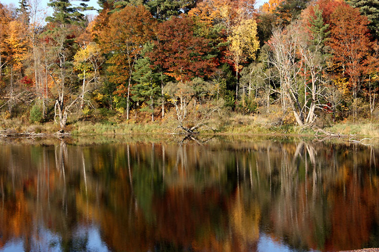 Canada Ontario Photos :: Fall :: Ontario, Bracebridge - reflection