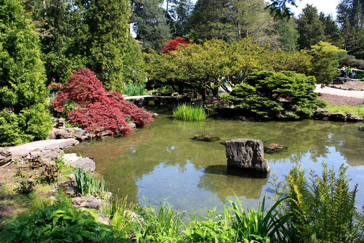 Canada Ontario Photos :: Burlington :: A pond in Royal Botanical Gardens
