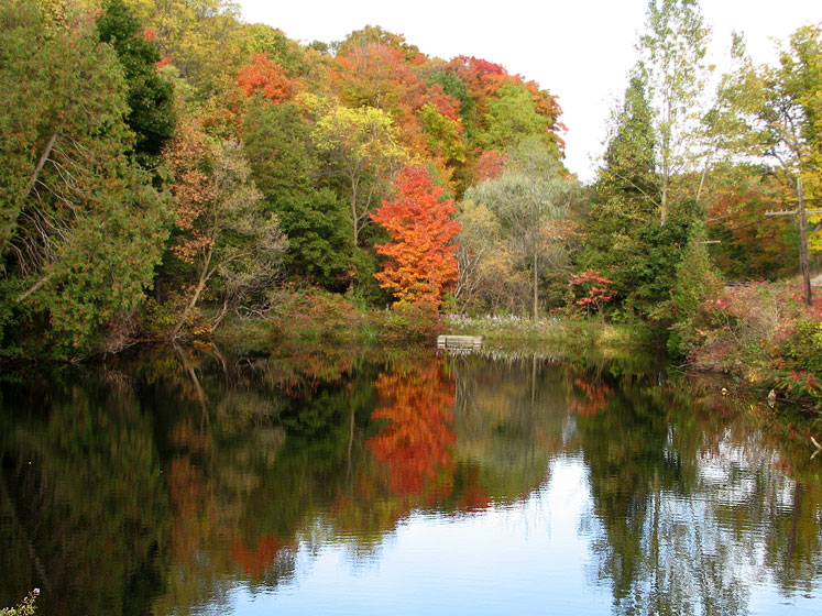 Canada Ontario Photos :: Campbelville :: A pond in Campbellville