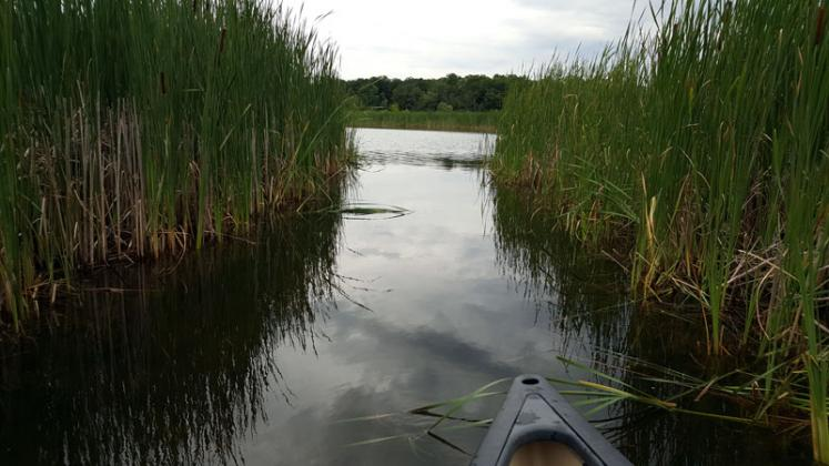 Canada Ontario Photos :: Alec :: Canoe ride through reeds. Eugenia lake.