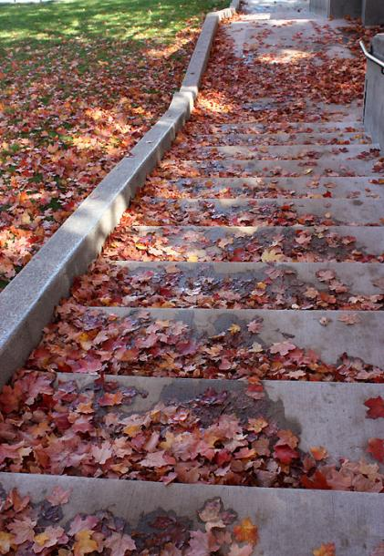 Canada Ontario Photos :: Fall :: Guelph. A carpet of red maple leaves