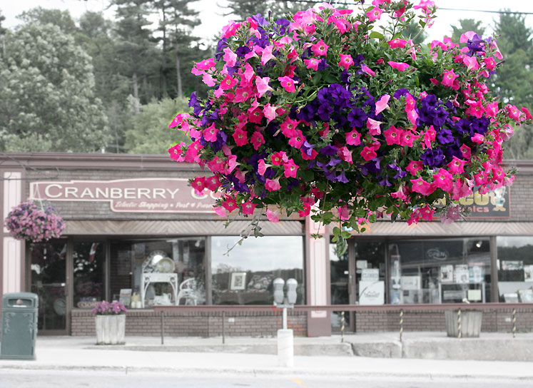 Canada Ontario Photos :: Haliburton :: Ontario. Haliburton - flowers