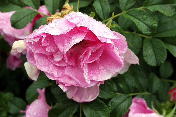 Canada Ontario Photos :: Kingston :: Ontario. Kingston- a morning after the rain
