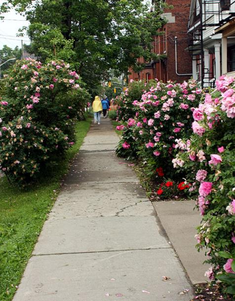 Canada Ontario Photos :: Kingston :: Kingston. A quiet street