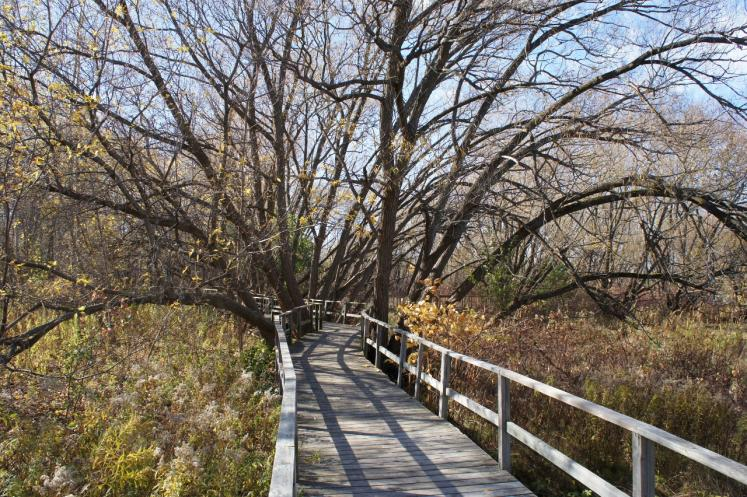 Canada Ontario Photos :: Collingwood :: Boardwalk Trail in fall Collingwood