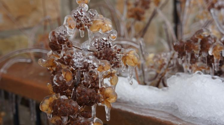 Canada Ontario Photos :: New Hamburg :: Ice Storm, New Hamburg