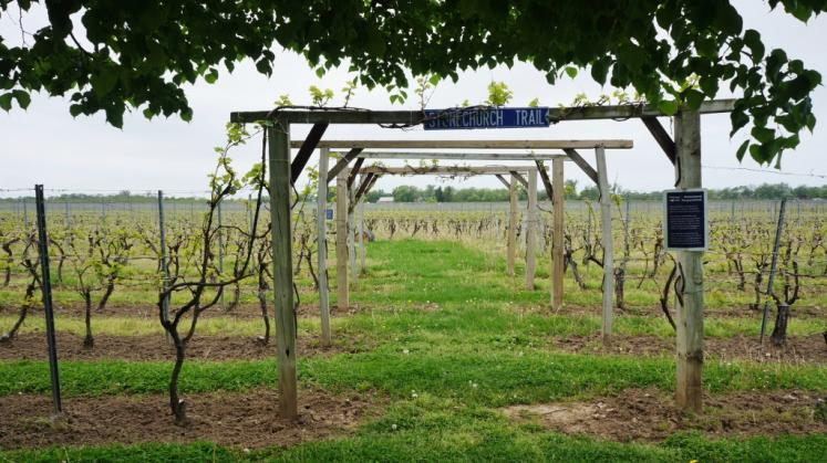 Canada Ontario Photos :: Niagara-on-the-Lake :: Stonechurch Trail at Small Talk Vineyards-Niagara on the Lake