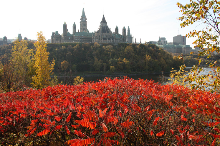 Canada Ontario Photos :: Fall :: Ottawa. Red bushes and Parliament Hill