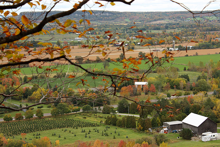 Canada Ontario Photos :: Rattlesnake Point :: A view on tree farm from the Rattlesnake Point