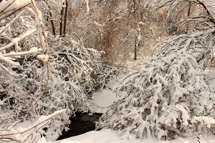 Canada Ontario Photos :: Winter :: Beautiful small park in Richmond Hill - a brook