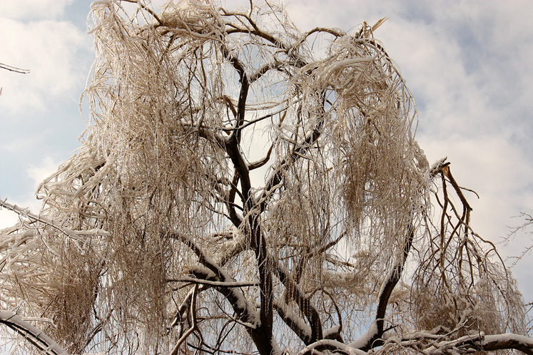 Canada Ontario Photos :: Winter :: Beautiful small park in Richmond Hill - ice covered tree
