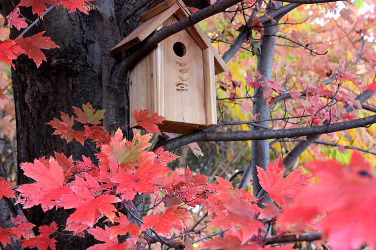 Canada Ontario Photos :: Fall :: Richmond Hill. Bird house on the tree in the park