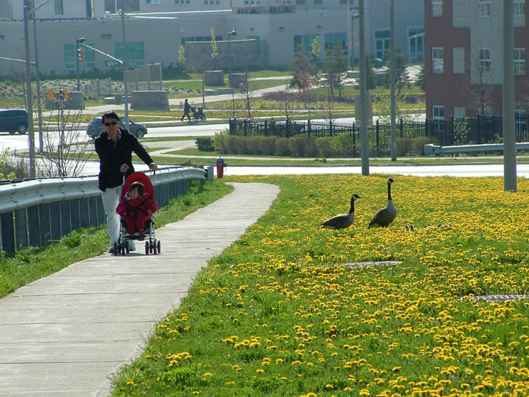 Canada Ontario Photos :: Valy :: Richmond Hill. Geese and people