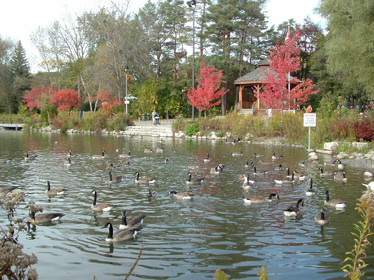 Canada Ontario Photos :: Richmond Hill :: Richmond Hill . Mill Pond  - Fall