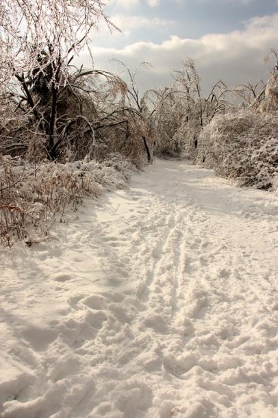 Canada Ontario Photos :: Winter :: Richmond Hill. A path in a park