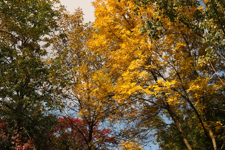 Canada Ontario Photos :: Torontonian :: Richmond Hill. Colorful trees in the park