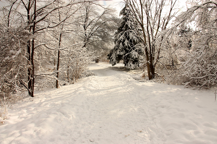Canada Ontario Photos :: Winter :: Richmond Hill - a walking path in the park