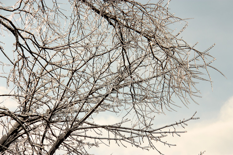 Canada Ontario Photos :: Richmond Hill :: Richmond Hill - icy trees