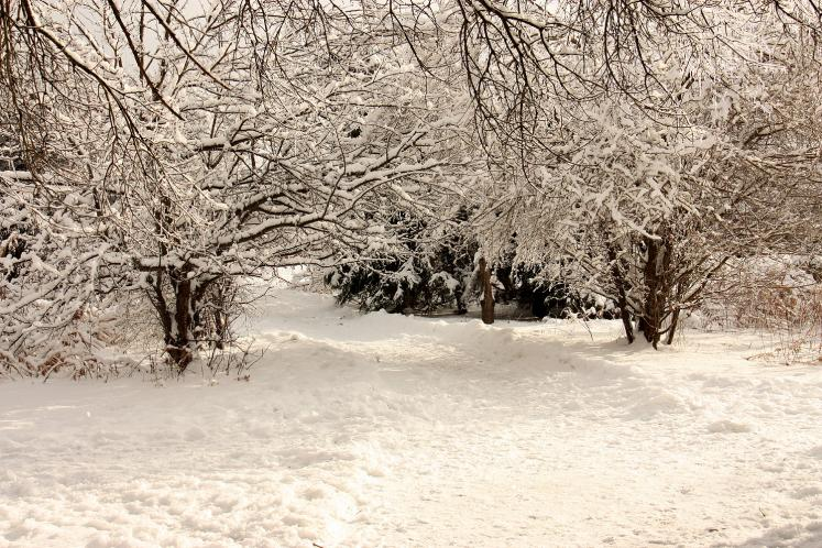 Canada Ontario Photos :: Torontonian :: Winter wonderland in a park in Richmond Hill