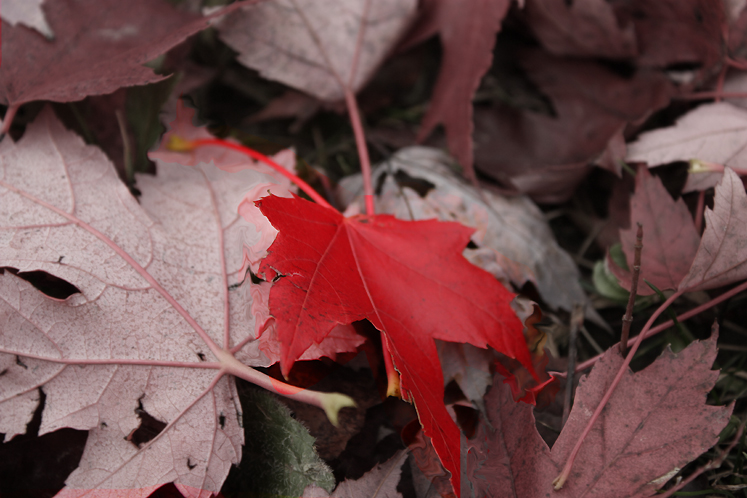 Canada Ontario Photos :: Fall :: Richmond Hill - fall