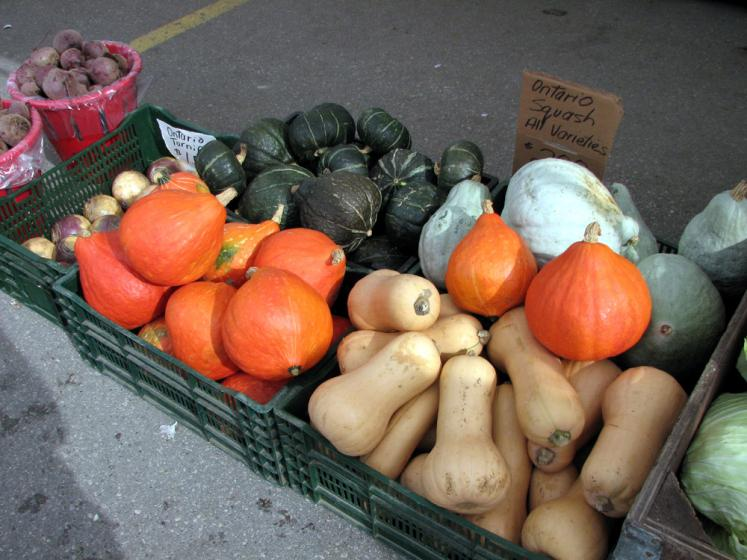 Canada Ontario Photos :: St. Jacobs :: St. Jacobs market. Squashes and pumpkins