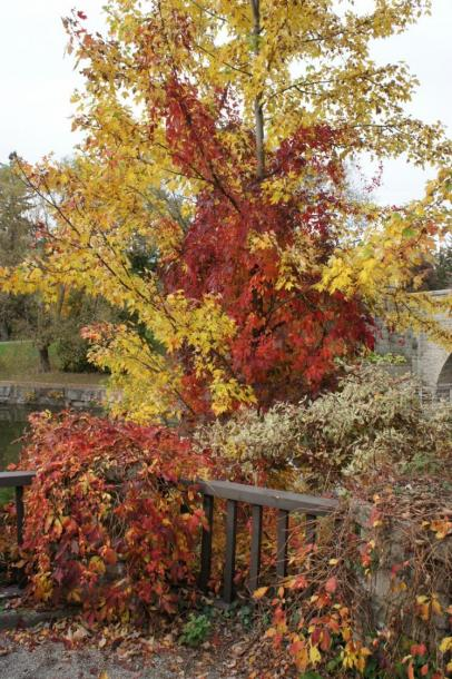 Canada Ontario Photos :: Fall :: Leaves changing colour in Stratford Shakespeare Gardens