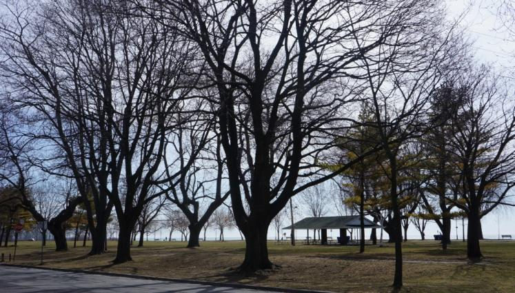 Canada Ontario Photos :: Toronto :: Beaches Park, Toronto