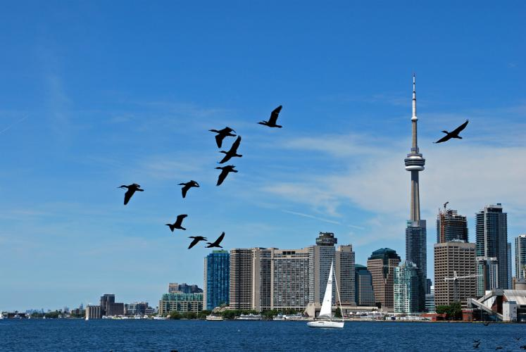 Canada Ontario Photos :: Alex-Yakon :: Toronto. Birds are flying across Ontario lake