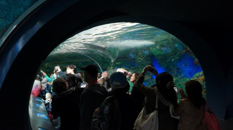 Canada Ontario Photos :: Toronto :: Moving Walkway through Ripleys new Aquarium Toronto