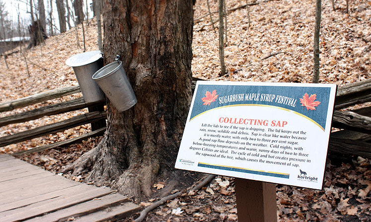 Canada Ontario Photos :: Vaughan - Kortright Conservation Area :: Kortright Conservation Area - collecting maple sap