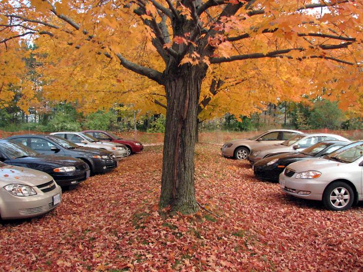 Canada Ontario Photos :: Nature :: Kortright Conservation Area - parking